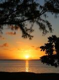 Tropische Serie #30 Lizenzfreies Stockfoto