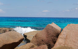 Tropische Seychellen Palmen auf dem La Digue Lizenzfreie Stockfotos