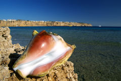 Tropische shell royalty-vrije stock foto's