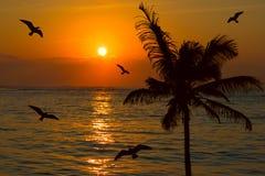 Tropische Sonnenuntergangszene Stockfoto