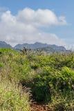 Tropische Spur lizenzfreie stockfotos