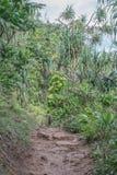 Tropische Spur mit üppiger Vegetation stockbilder