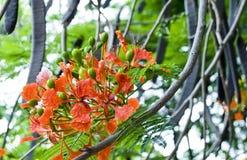 Tropische Startwerte für Zufallsgenerator und Blumen Stockfoto