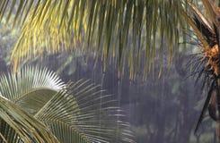 Tropische stortbui Stock Foto's