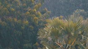 Tropische Stortbui in de Wildernis tegen de achtergrond van een Groen Bos met een Palm stock videobeelden