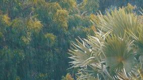 Tropische Stortbui in de Wildernis tegen de achtergrond van een Groen Bos met een Palm stock footage