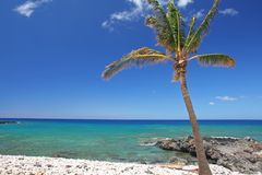 Tropische Strand en palm Royalty-vrije Stock Afbeeldingen