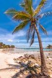 Tropische strand en palm in Isla Mujeres, Mexico stock foto's