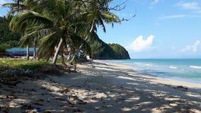 Tropische Strand-und Kokosnuss-Bäume stockfoto