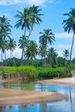 Tropische Strand- und Palmen Lizenzfreies Stockfoto