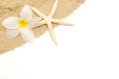 Tropische strandgrens Stock Fotografie