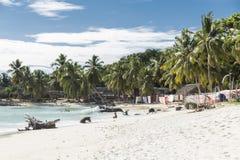 Tropische Strandlandschaft mit Palmen lizenzfreie stockfotos