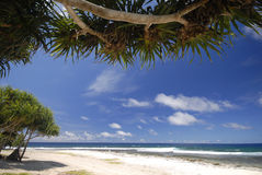 Tropische Strandszene, Vanuatu stockbild