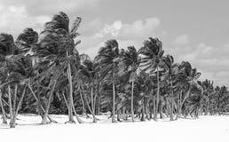 Tropische strandwildernis Royalty-vrije Stock Foto's