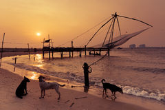 Tropische strandzonsondergang met honden bij oceaankust Royalty-vrije Stock Afbeeldingen