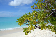Tropische struikgewas-2 Stock Fotografie