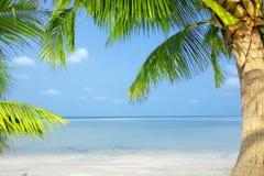 Tropische Szene Stockfoto
