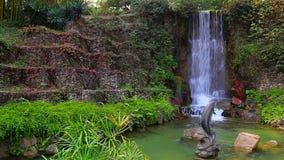 Tropische tuin stock video