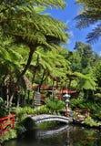 Tropische tuin in Funchal (Madera, Portugal) Stock Foto's