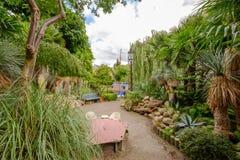 Tropische tuin in het stadscentrum van Amsterdam, Prinseneiland Stock Fotografie