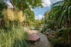 Tropische tuin in het stadscentrum van Amsterdam, Prinseneiland Stock Foto
