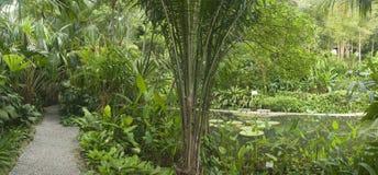 Tropische Tuin, Maleisië Stock Afbeeldingen