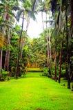 Tropische tuin met palmen en teruggegeven met Royalty-vrije Stock Afbeelding