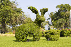 Tropische tuin in Thailand Royalty-vrije Stock Fotografie