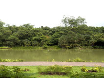 Tropische tuinen en vijver Stock Afbeelding