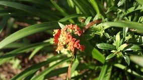 Tropische uitheemse gewassen en bloemen op het eiland van Bali, Indonesië daglicht, zonnige dag Close-upinstallaties, groene acht stock videobeelden