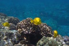 Tropische Unterwasserszene Lizenzfreies Stockfoto