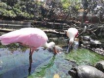 Tropische Vögel Lizenzfreies Stockbild