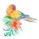 Tropische Vögel auf weißem Hintergrund Palmblätter und tropische Blume Papagei Lizenzfreie Stockfotos