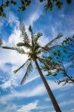 Tropische vakantie onder blauwe hemel Stock Foto