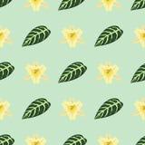 Tropische van de het patroonwildernis van de bladerenzomer groene exotische naadloze van de het palmbladaard van de installatie b Royalty-vrije Stock Foto's