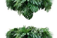 Tropische van de de installatiestruik van het bladerengebladerte bac van de de regelingsaard bloemen stock foto