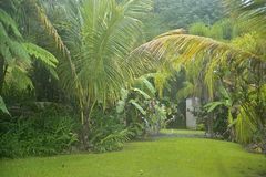 Tropische vegatation, Gr Yunque, Puerto Rico Royalty-vrije Stock Foto