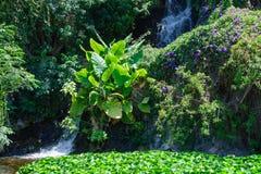 Tropische vegetatie Royalty-vrije Stock Foto's