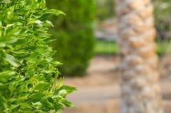 Tropische vegetatie Royalty-vrije Stock Afbeelding