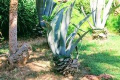 Tropische vegetatie in het park van de 100ste verjaardag van Ataturk Alanya, Turkije Stock Foto