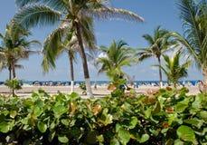 Tropische Vegetation und Strand Lizenzfreie Stockfotografie