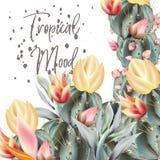 Tropische Vektorillustrationskaktuspflanzen und -blumen Lizenzfreies Stockbild