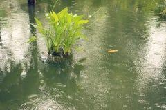 Tropische vijver onder regen stock afbeelding