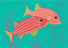 Tropische vis-militairen vector illustratie