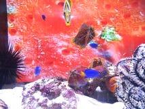 Tropische Vissen stock afbeelding