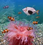 Tropische vissen Royalty-vrije Stock Foto