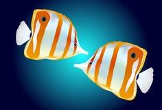 Tropische Vissen Stock Foto