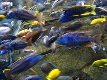 Tropische Vissen in beweging stock afbeeldingen