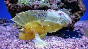Tropische vissen in een tank Royalty-vrije Stock Afbeelding