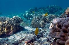 Tropische vissen en koralen Royalty-vrije Stock Afbeelding